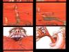 Kasfruit Storyboard